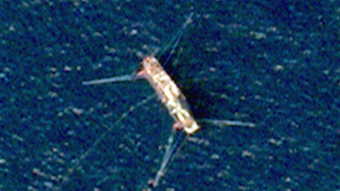 Satellites track illegal fishing from orbit