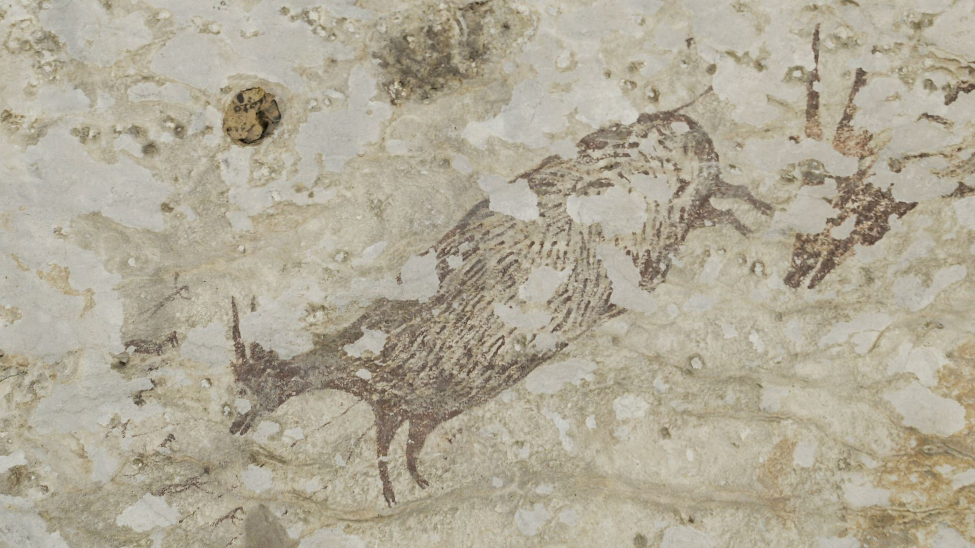 Study: 44,000-year-old cave paintings discovered in Indonesia