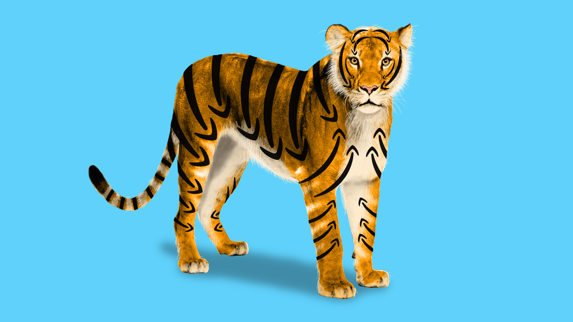 A tiger with Amazon arrows on its coat