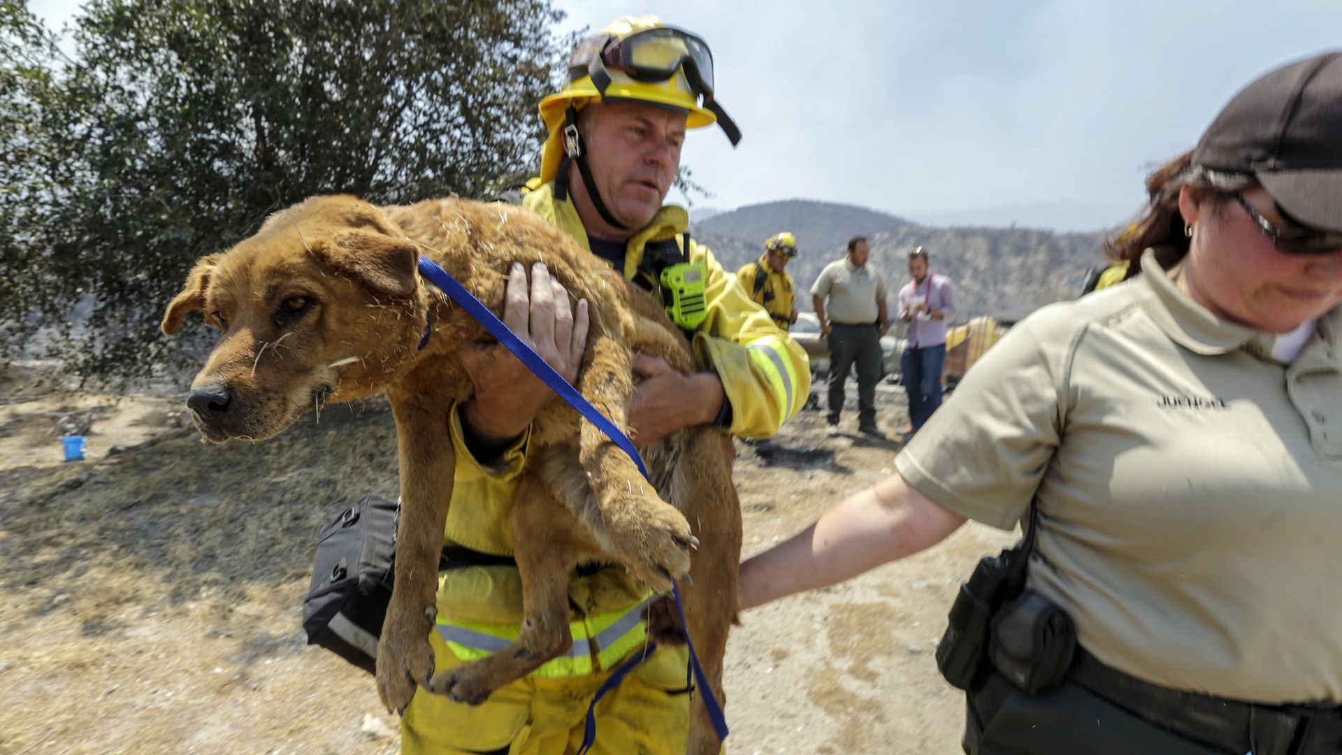 A fireman carrying a dog