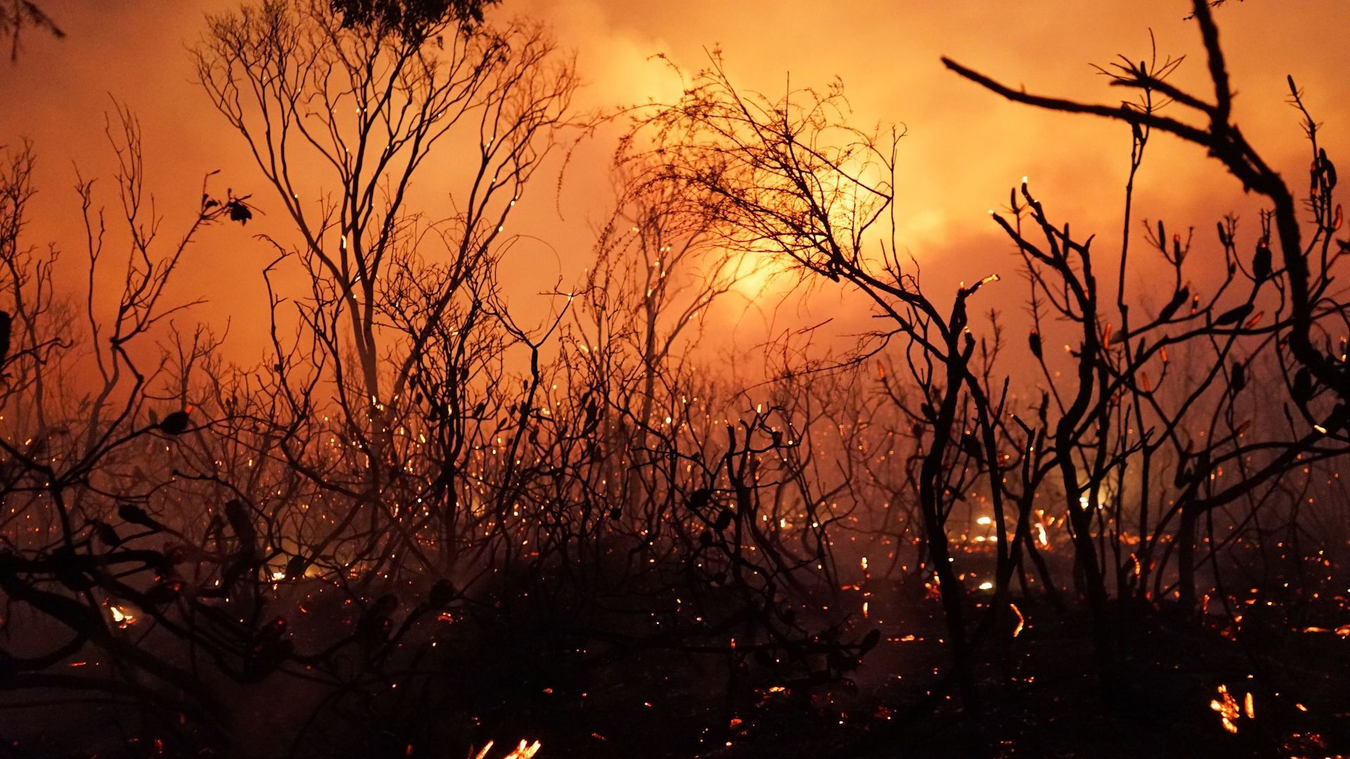 Bushfire during Australia's hottest summer on record.
