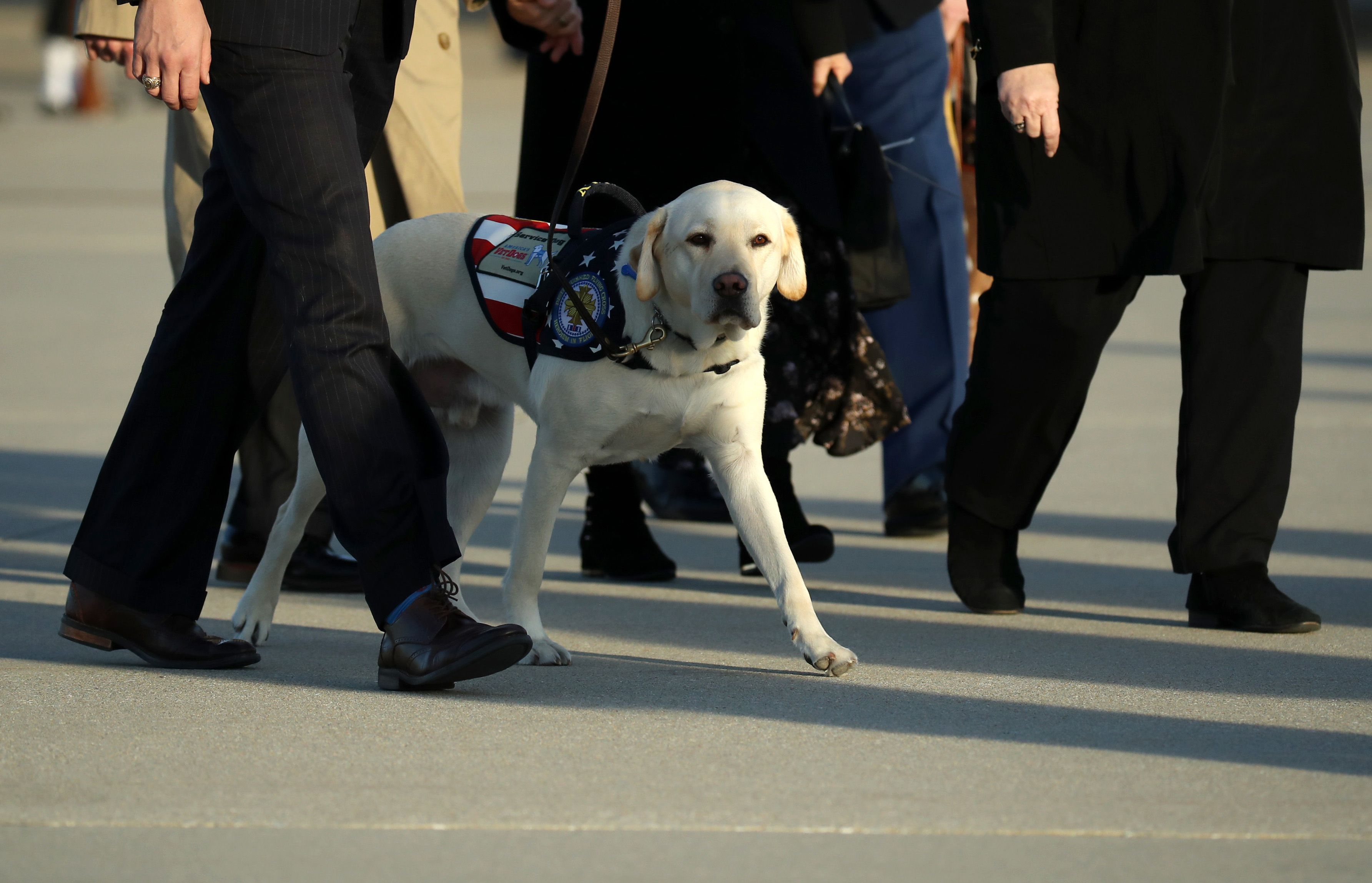 George H. W. Bush's service dog, Sully arriving at Joint Base Andrews.