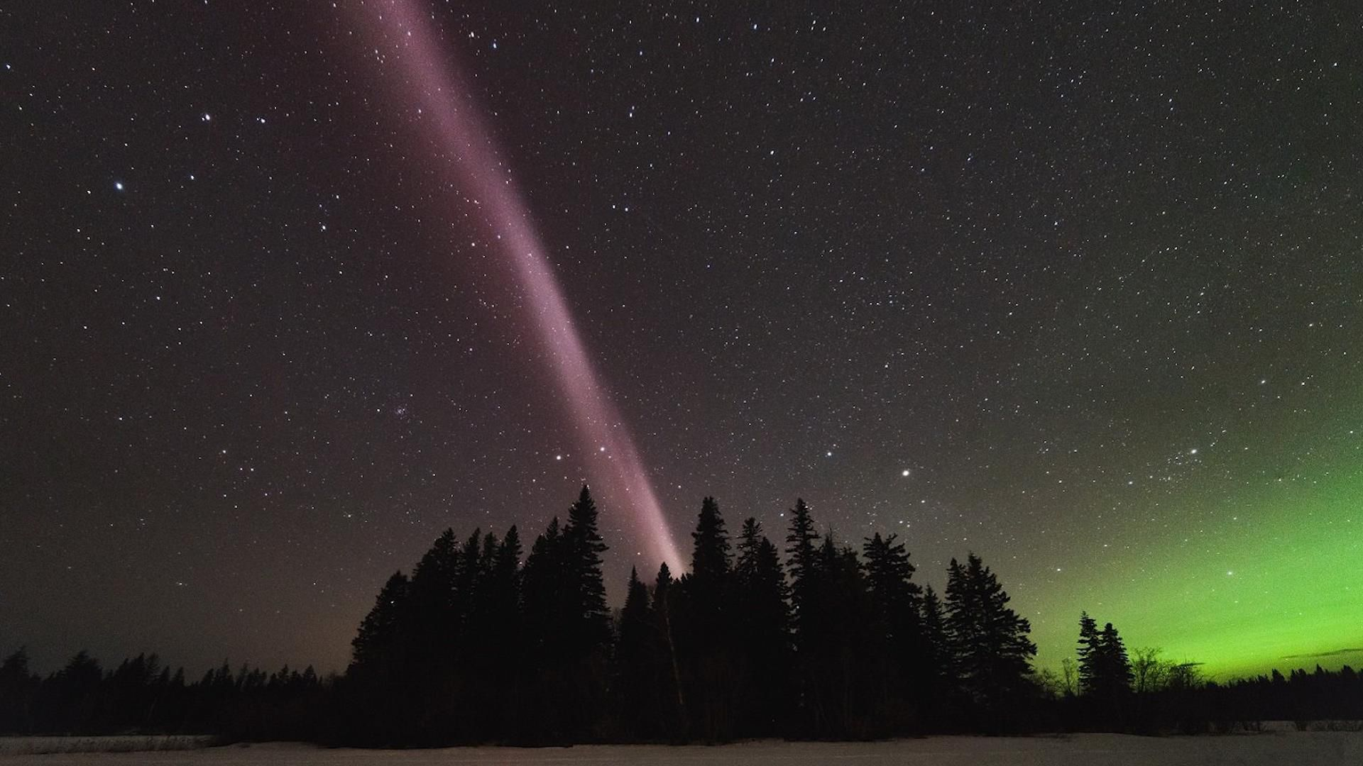 In this image, STEVE is a glowing pink streak across the dark starry purple sky. There are a row of black pine trees.